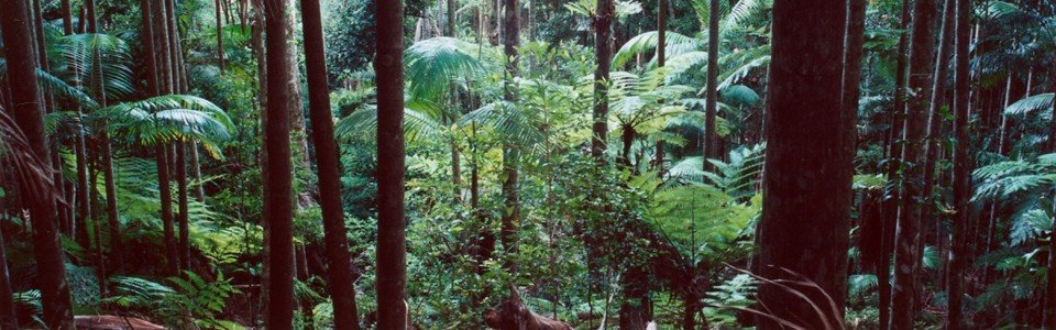 The Prince's Rainforests Project